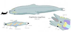 Propellocetus by Concavenator