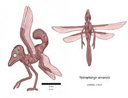 Tetrapteryx by Concavenator