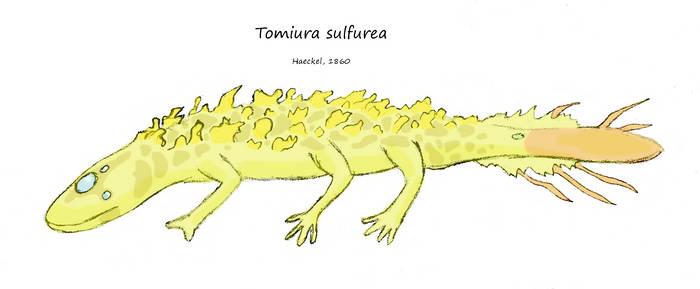 Tomiura