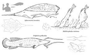 SftD: Predators of the Thunderwhale