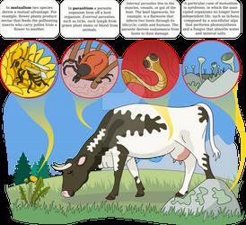 Ecological relations (Zanichelli)