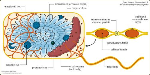 Ea: Eucytobionta (1/3)