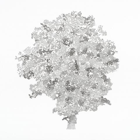 olmo campestre by mustbepositivee
