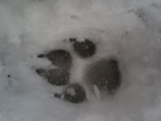 The paw from Lolle (my dog) by Tiquilla