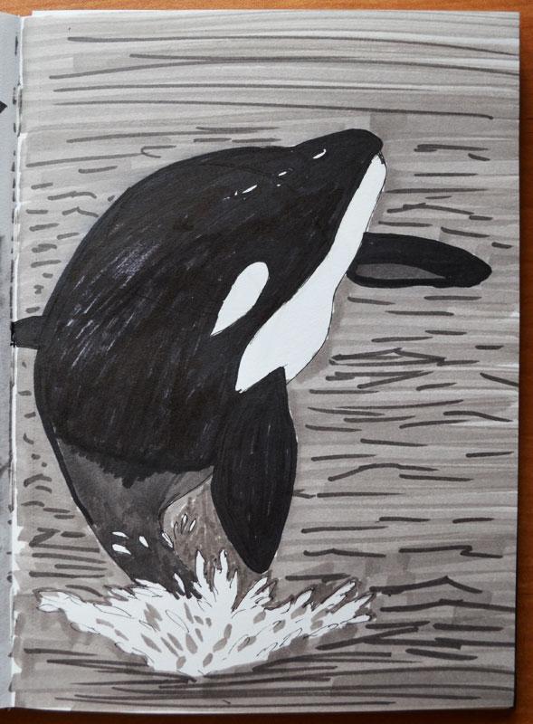 Killer Whale by Irik77