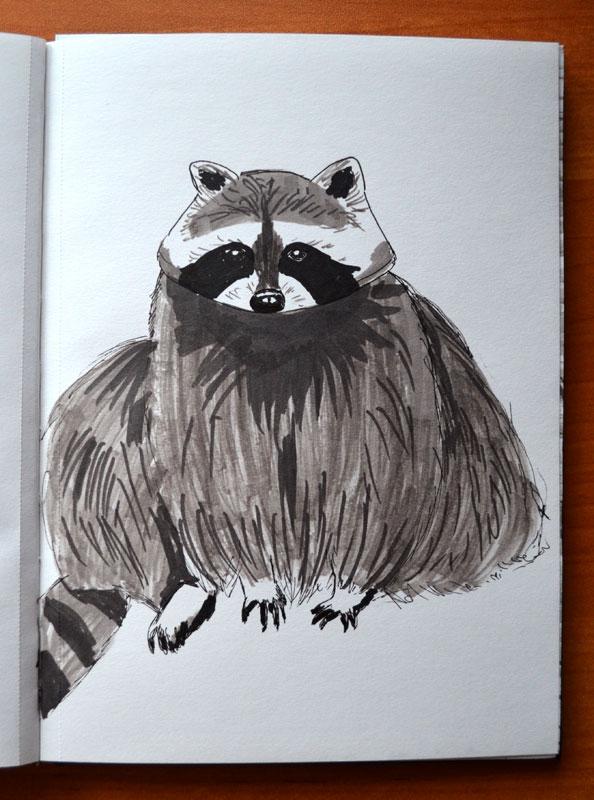Raccoon by Irik77