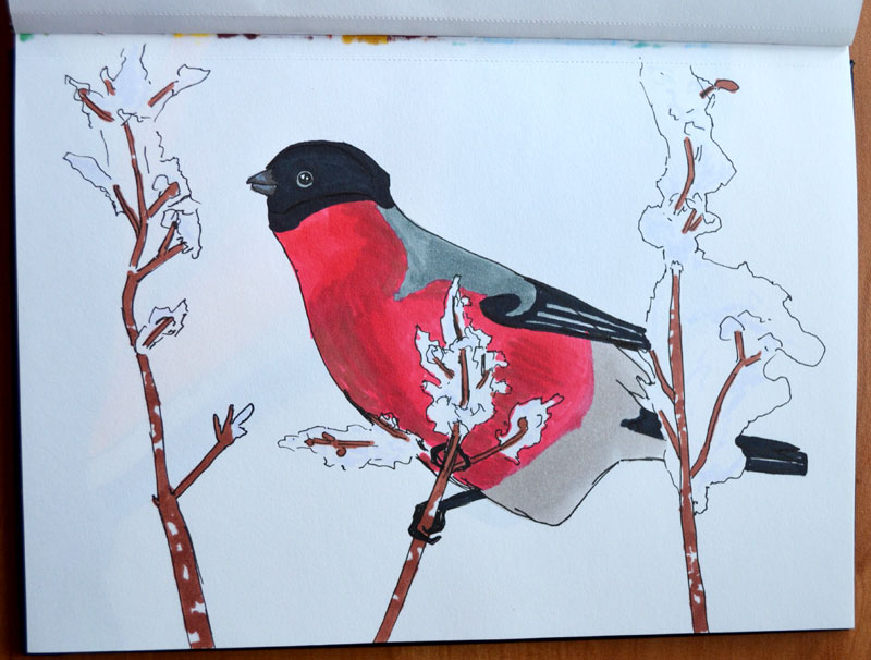 Bullfinch by Irik77