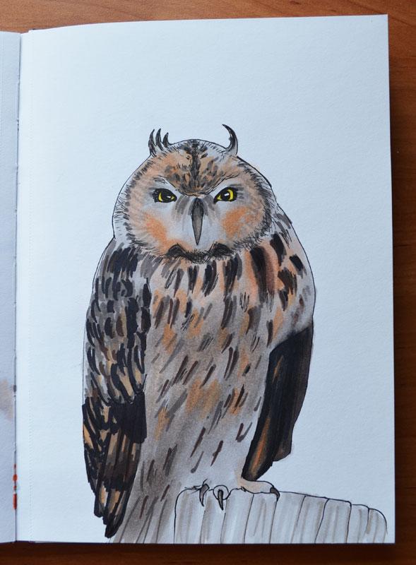 Owl 003 by Irik77