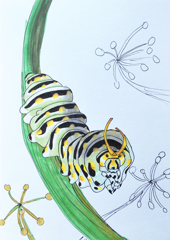 Caterpillar by Irik77