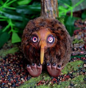 Kiwi bird 001