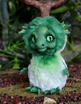 Green Sea Dragon 003