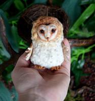Barn owl 005 by Irik77