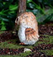 Barn owl 004 by Irik77