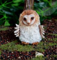 Barn owl 003 by Irik77
