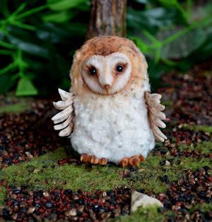 Barn owl 003