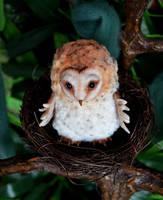 Barn owl 002 by Irik77