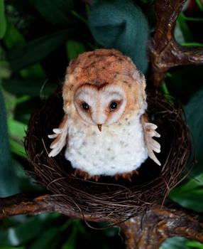 Barn owl 002