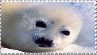 Seal pup stamp by Nei-Ning
