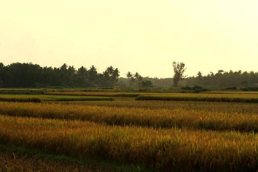 Ricefield-Sawah