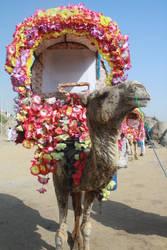 Mr.Camel