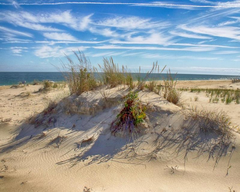 Dune at Cape Henlopen (Color)