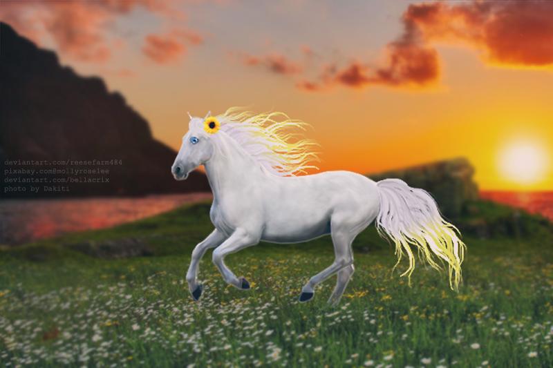 Flower Field -- White Horse