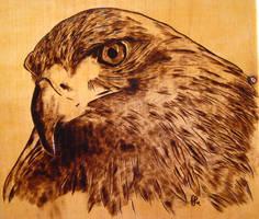 Falco by FuocoRupestre