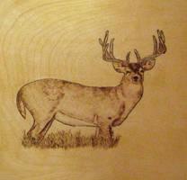 Cervo su Betulla by FuocoRupestre