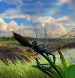 Dragonfly by Aschenstern