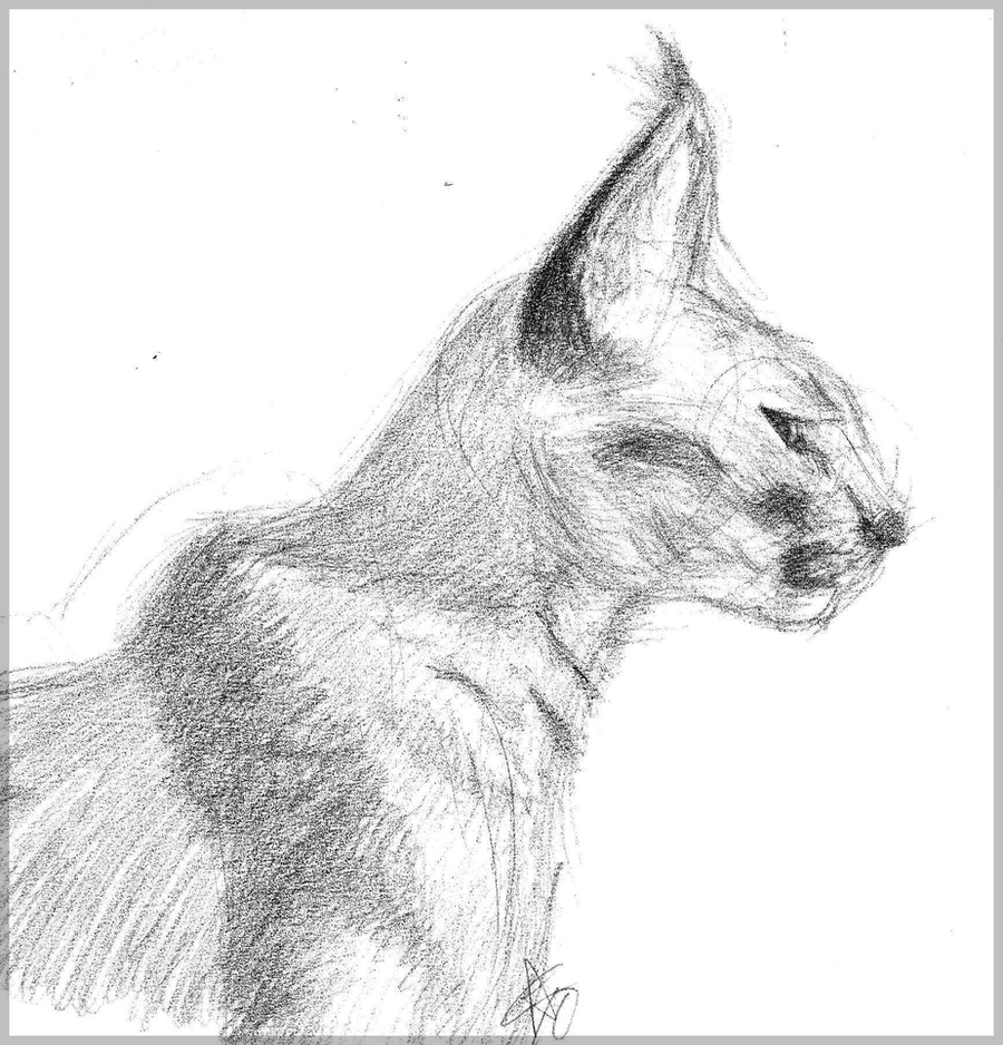 Caracal drawing - photo#27