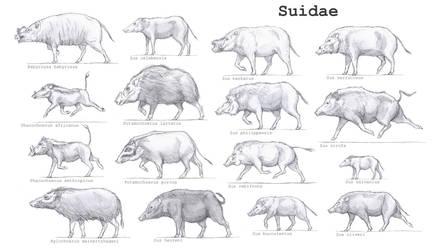 Suidae