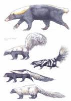 Mephitidae, Teledu and skunks by Gredinia