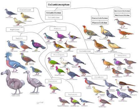 Bird cladistic : Columbimorphae diversity