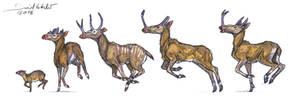 Ruminantia 1 : Protoceratidae