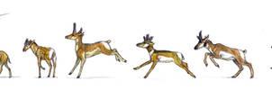 Ruminantia 2 : Antilocapridae and extinct families by Gredinia