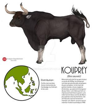 Kouprey