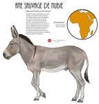 Nubian wild ass