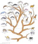 Cetartiodactyla phylogeny