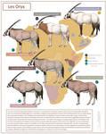 Oryxes