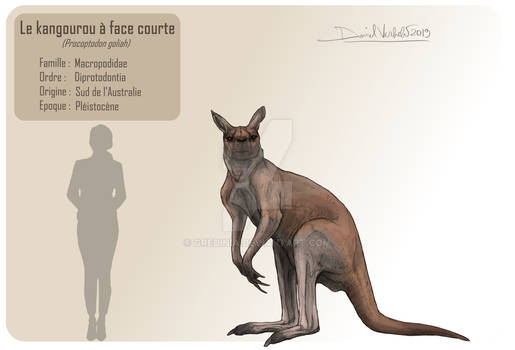 The short-faced kangaroo