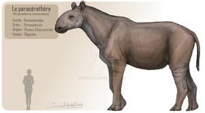 The paraceratherium