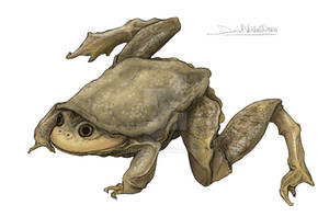 World Water Frog Day !