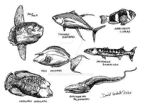 Some fishes