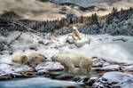 bears on snow