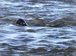 Newburgh seal