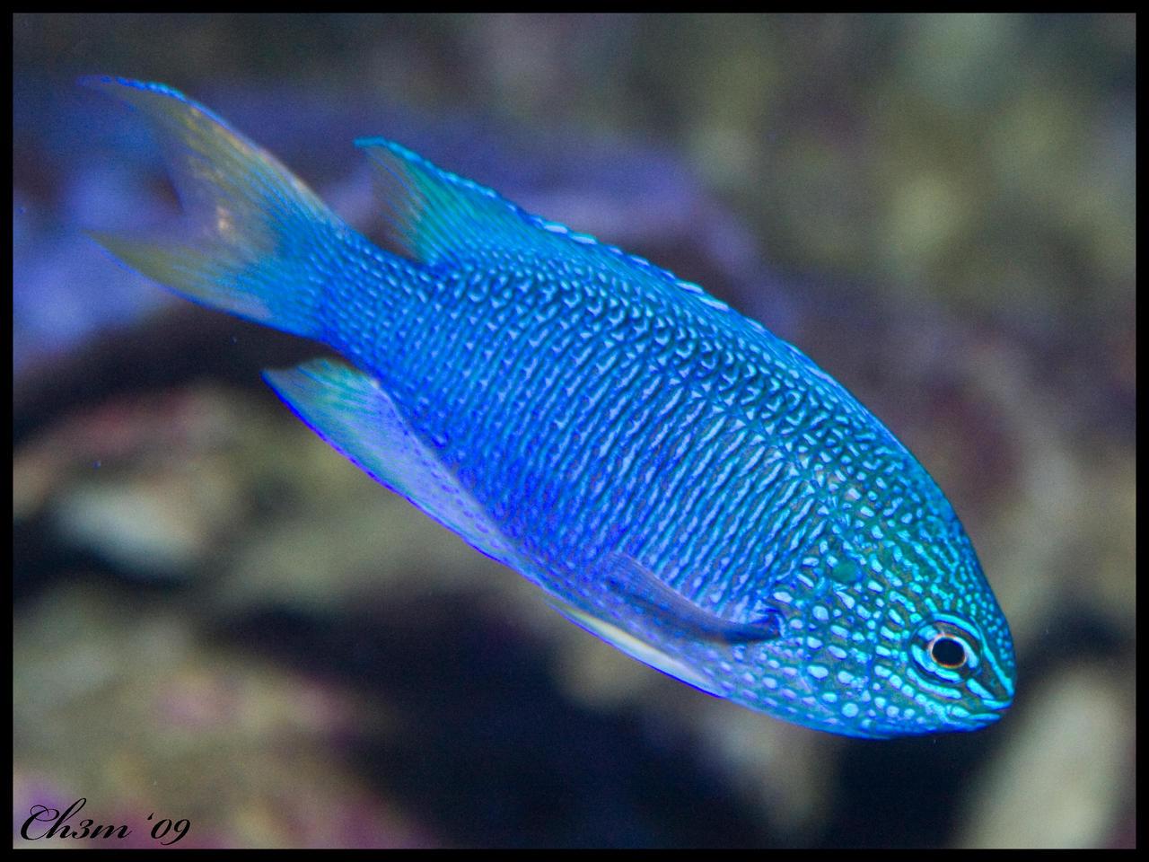 Christian speed dating blue fish
