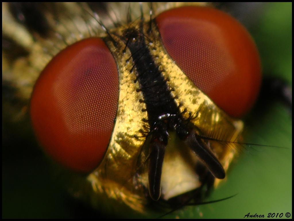 Fly Eyes Fly Eyes
