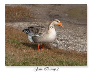 Goose Beauty 2 by JoshuaJones