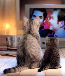 Cats love Klainebows too by DestielandCrowley