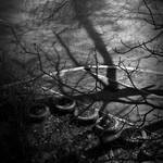 branch shadow by aloner777